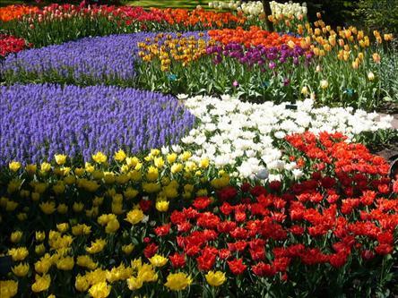 Türkiye'nin Botanik Bahçesi Samsun.jpg