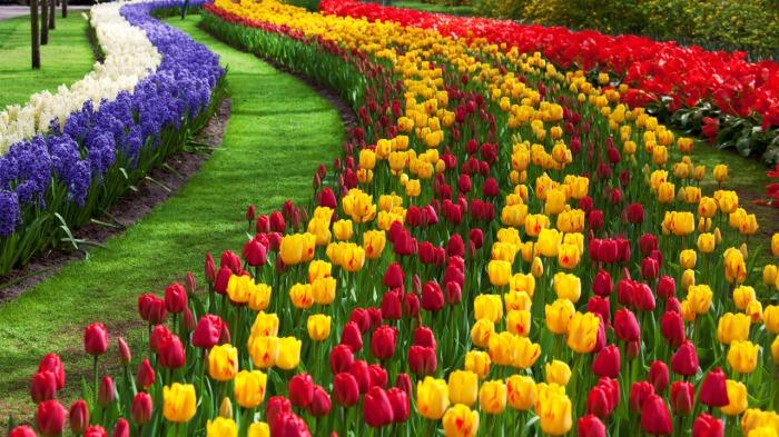 tulip-flower-garden.jpg